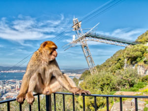 Ape Of Gibraltar With The Cable Car In The Background